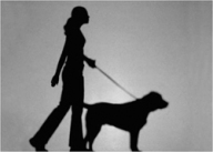 leadership lessons learned on a leash
